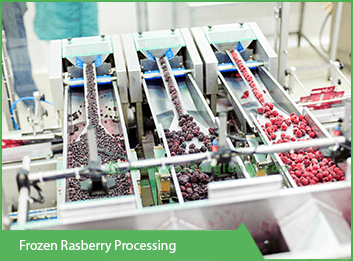 frozen-rasberry-processing vackerglobal